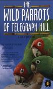 Wild Parrots of Telegraph Hill [Region 1]
