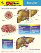 Exam Notes Liver St