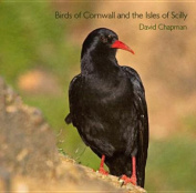 Birds of Cornwall and the Isles of Scilly