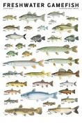 Freshwater Gamefish of North America Poster