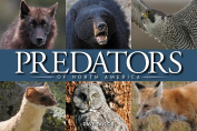Predators of North America