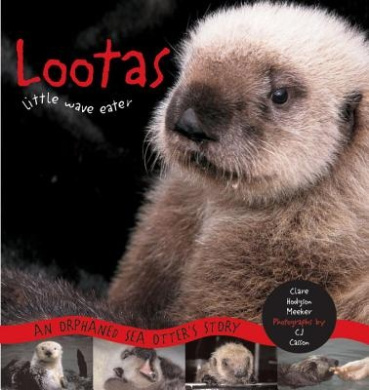 Lootas Little Wave Eater: An Orphaned Sea Otter's Story