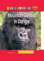 Mountain Gorilas in Danger