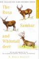 The Rusa Sambar and Whitetail Deer