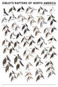 Waterford Press WFP935622055 Sibleys Raptors N. America Poster