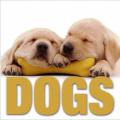Dogs (Cubebook)