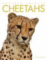 Cheetahs (Amazing Animals