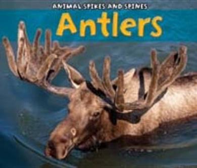 Antlers (Acorn