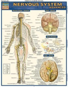 Nervous System Advanced