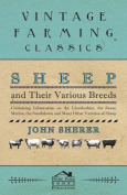 Sheep and Their Various Breeds - Containing Information on the Lincolnshire, the Saxon Merino, the Southdown and Many Other Varieties of Sheep