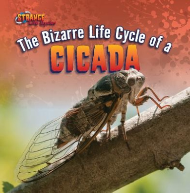 The Bizarre Life Cycle of a Cicada (Strange Life Cycles (Gareth Stevens))