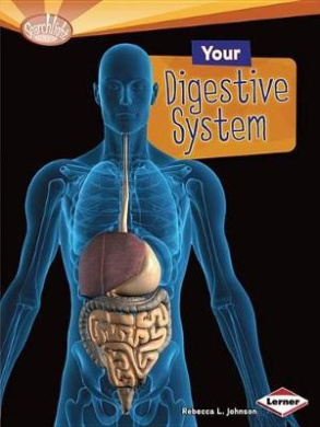 Your Digestive System (Searchlight Books: How Does Your Body Work? (Paperback))