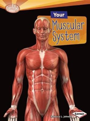 Your Muscular System (Searchlight Books: How Does Your Body Work? (Paperback))