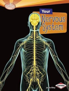 Your Nervous System (Searchlight Books: How Does Your Body Work? (Paperback))
