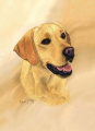Yellow Labrador Retriever Lab Playing Cards - Art by Robert May