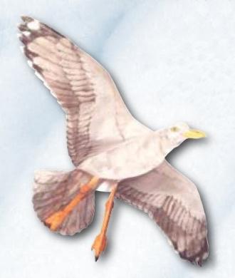 Jackite Seagull - Assembled