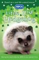 Little Lost Hedgehog (RSPCA)