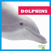 Life Under the Sea: Dolphins