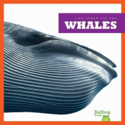 Life Under the Sea: Whales