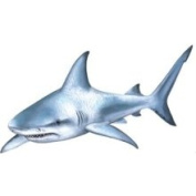 Walls of The Wild 190818 Shark Wall Decal