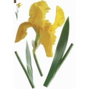 Plage PL160810 Peel and Stick Yellow Iris European Wall Decals