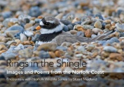 Rings in the Shingle