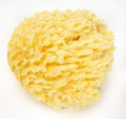 """Natural Sea Wool Bath Sponge 4-12.7cm by Spa Destinations """"Creating The In Home Spa Experience"""""""