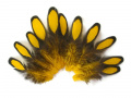 Yellow Laced Hen Feathers for Craft Feathers - 12pc/bag