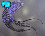 Moonlight Feather, Hair Extension Feathers; Purple Grizzly Thick Rooster Feathers; 29cm Long and Up; 6 Pieces Per Pack