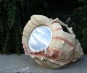 Solar Garden Decor Seashell Spotlight