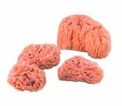 Royal & Langnickel Natural Ocean Artist Sponges 4/Pkg-3 Medium Wool Sponges + Jumbo Sponge