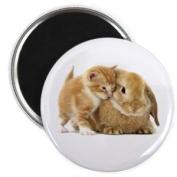 Kitten BUNNY RABBIT Easter Animals 2.25 Fridge Magnet