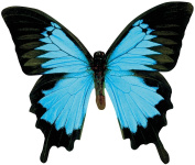 Paper House M-0294E 6-Pack Die Cut Refrigerator Magnet, Blue Butterfly