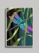 Colourful Dragonfly Refrigerator Magnet