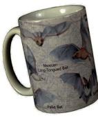 Bats of North America 330ml Ceramic Coffee Mug Tea Cup