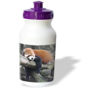 Albom Design Animals - Adorable Red Panda, Sichuan Province, China - Water Bottles