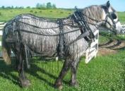 Nylon Webbing Buggy Horse Fly Net - Fly Sheet