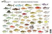 Standard Fish Chart Gulf Of Mexico Md#