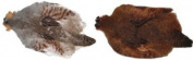 Hungarian Partridge Whole Skins Colour