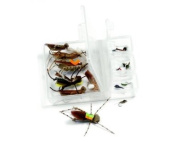 Trout fly fishing flies kit - collection of 18 flies - Hopper Flies and Dropper flies