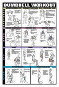 Dumbbell Workout Ii 61cm X 91.4cm Laminated Chart