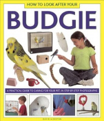 How to Look After Your Budgie