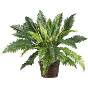 Marginatum with Wicker Basket Silk Plant