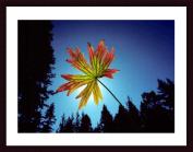 Barewalls 322398S61:BLK CW WTW Leaf Wood Framed Art Print