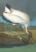 Buy Enlarge 0-587-03554-4C12X18 Wood Stork- Canvas Size C12X18