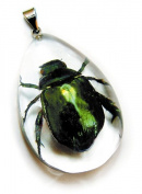 Ed Speldy East SD1105 Real Bug Necklace-Chafer Beetle