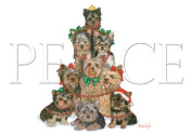 Pipsqueak Productions C544 Holiday Boxed Cards- Yorkshire Terriers