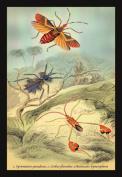 Buy Enlarge 0-587-15093-9P20x30 Insects- Syrtomastes Paradoxus Cerbus Flaveobus et al.- Paper Size P20x30