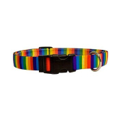 Yellow Dog Design RS100XS Rainbow Stripes Standard Collar - Extra Small
