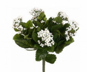 FBK107-WH 13.5 in. White Kalanchoe Bushes X5- Case of 6